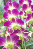 Purple and green orchid — Stock Photo