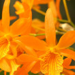 Stock Photo: Vivid orange orchid