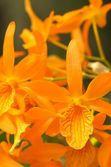Vivid orange orchid — Stock Photo