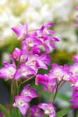 Cute pink orchid — Stock Photo
