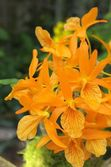 Vivid orange orchid — Stockfoto