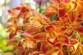 Orange gradering orchid — Stockfoto
