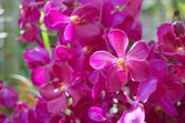 Vivid purple orchid flowers — Stock Photo