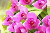 Vivid purple orchid flowers — Stock Photo