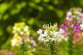Vita och gröna blommor i grönt — Stockfoto