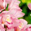 Many pink orchid flowers — Stockfoto #38688577