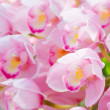 Many pink orchid flowers — Foto de stock #38688977