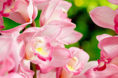 Many pink orchid flowers — Stock Photo