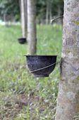 натуральный каучук — Стоковое фото
