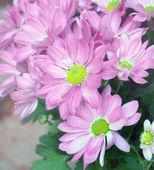 Flower in softfocus — Stock Photo
