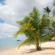 A beautiful image of tropical paradise — Stock Photo #21332429
