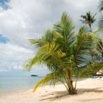 A beautiful image of tropical paradise — Stock Photo