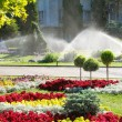 Stockfoto: Lawn watering sprinkler