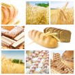 Cereal collage — Stock Photo