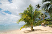 A beautiful image of tropical paradise — Stock Photo
