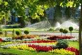 Zalévání trávníku postřikovače — Stock fotografie
