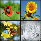 4 つの季節 — ストック写真