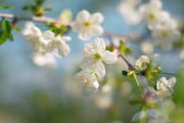 Spring background — Stockfoto