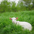 Foto Stock: Young goat