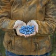Foto de Stock  : Blue sweet berry in hand