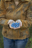 Blue sweet berry in hand — Stock Photo