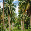 Foto Stock: Coconut jungle