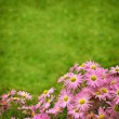 Autumn flowers — Stockfoto #41081077