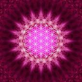 Yaşam - kutsal geometri çiçek — Stok fotoğraf