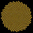 Sunflower seeds - golden ratio - golden spiral - fibonacci spiral, — Stock Photo #21339289