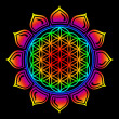 Stock Photo: Flower of life - Lotus flower - symbol healing and harmony
