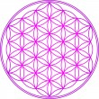 Stock Vector: Flower of life - sacred geometry - symbol harmony and balance