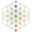 Flower of life - chakras - symbol harmony and balance — Foto Stock