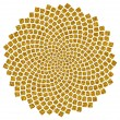 Sunflower seeds - golden ratio - golden spiral - fibonacci spiral, — Stock Photo #22002075