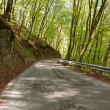 Mountain road in the forest — Stock Photo