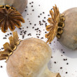 Stock Photo: Poppy seed capsule in closeup