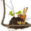 Stock Photo: Young cuttings of seed and capsules with branch, pot and bamboo