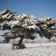 Pine tree in snowy landscape with dog — Stock Photo #24986219