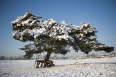 Pine tree in snowy landscape with dog — 图库照片