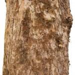 Постер, плакат: Scaly tree bark of the Platane