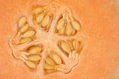 Orange melon kernel in close up — Stock Photo
