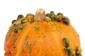 Orange pumpkin green bulbs closeup — Stock Photo