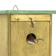 Tomtit entering wooden bird house — Stock Photo