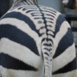 Zebra from behind — Stock Photo #38903925
