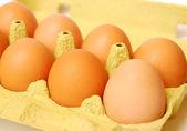 Eggs — 图库照片
