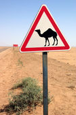 Camel warn — Stock Photo