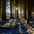 Sun through dark winter forest — Stock Photo #21005477