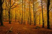 Sonbahar Kayran — Stok fotoğraf