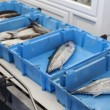 Organizing fish for the auction — Stock Photo