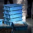 Stock Photo: Fish auction ready