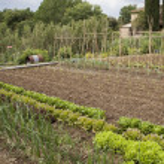 Organic vegetables garden — Stock Photo